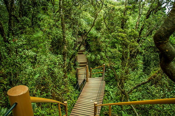 Khu rừng rêu Mossy Forest