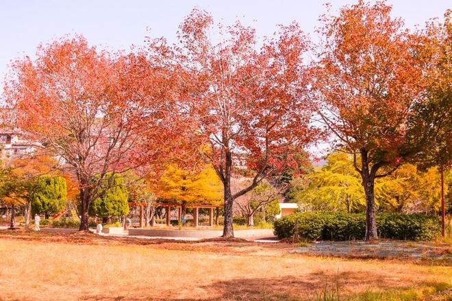 Sắc đỏ ngập tràn trên đất Nhật