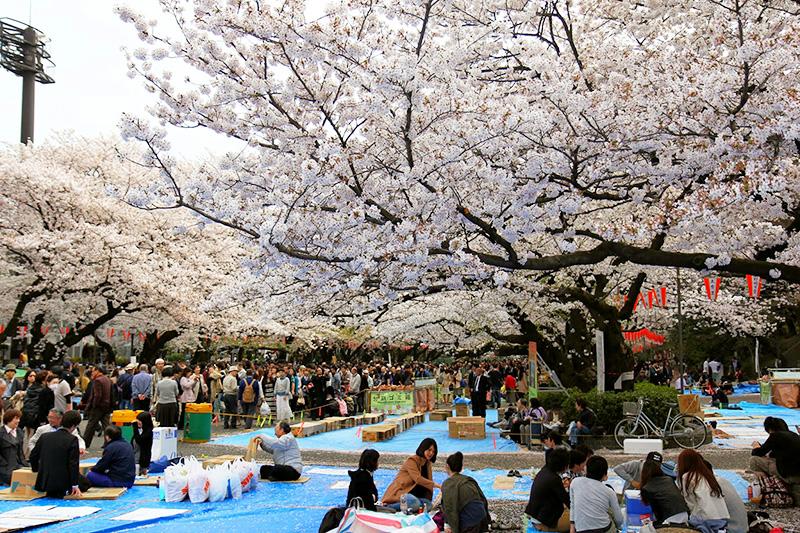 Vé máy bay khuyến mãi khám phá lễ hội Hanami nổi tiếng Nhật Bản