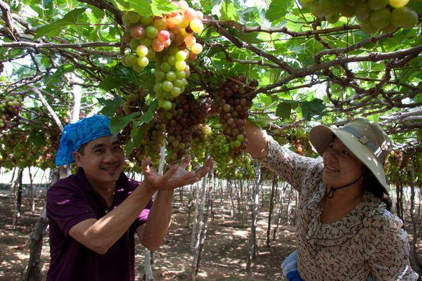 Lễ hội nho và rượu vang Ninh Thuận