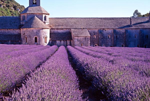 Provence - cánh đồng hoa Lavender